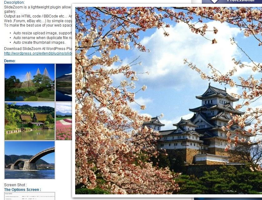 Как красиво вывести большое изображение | SlideZoom | n-wp.ru