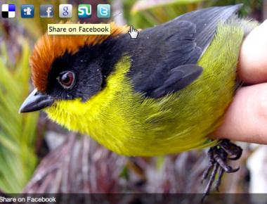 Как отправить изображения в социальные сервисы   ImageShare   n-wp.ru