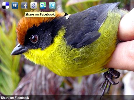 Как отправить изображения в социальные сервисы | ImageShare | n-wp.ru