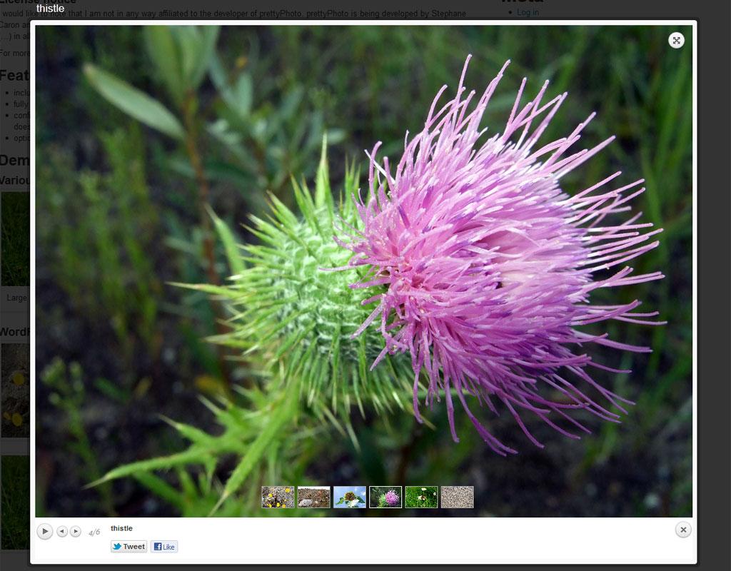 Вывод изображений и видео поверх содержимого - плагин prettyPhoto Media (10)